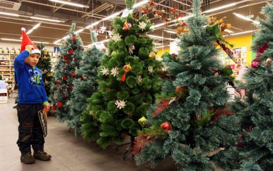 Как правильно выбрать хорошую новогоднюю елку
