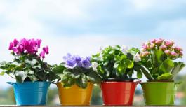 Семена цветов для горшков – выращивание растений своими руками