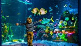 Зачем в аквариуме растения
