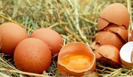 Из-за употребления яиц повышается риск преждевременной смерти — ученые